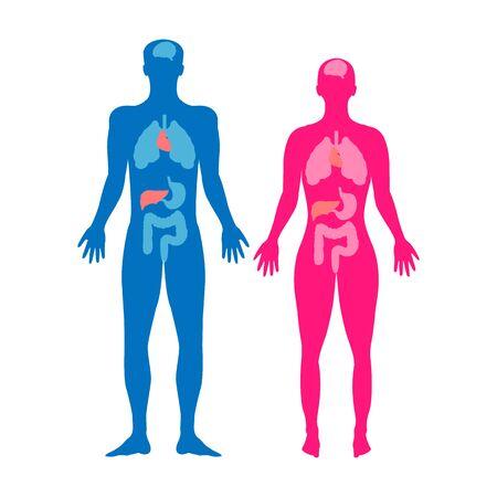 Man and woman anatomy. Medicine vector