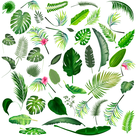 Tropical leaves big collection. Vector isolated elements on the white background.
