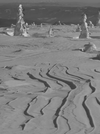snowdrift: Snowdrift shaped by wind