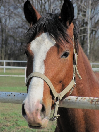 curiousness: portrait of a curious brown horse
