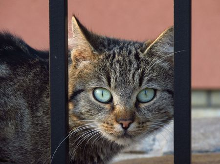 wellfare: a cat looking through the fence