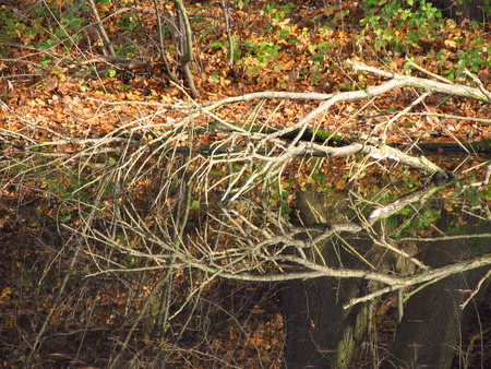 a branch hanging above the river eflecting on the water surface photo