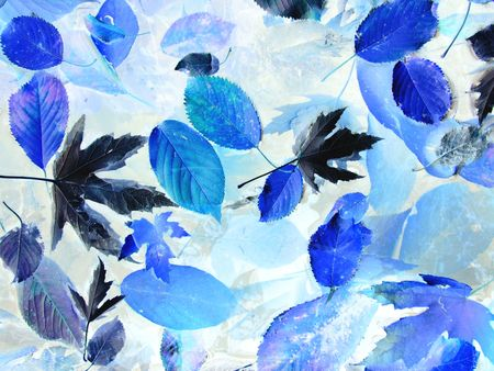 converted: picture of many fallen leaves converted to blue colors Stock Photo