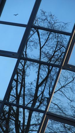 burnished: reflection of trees in the widows of a modern building with a picture of a bird Stock Photo