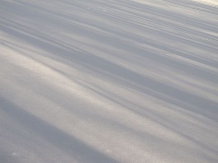 untouched: linear shadows of trees on untouched snow