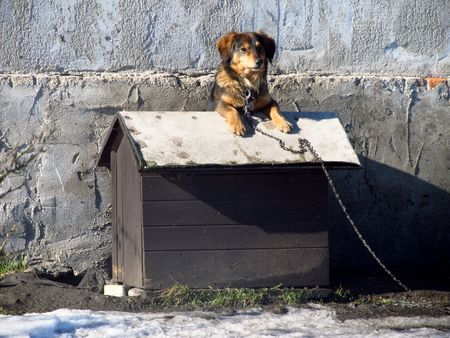 cuteness: dog on the roof of its own kennel