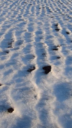 furrows: lines of furrows on the field in winter