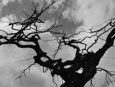 ghostlike: haunted tree Stock Photo