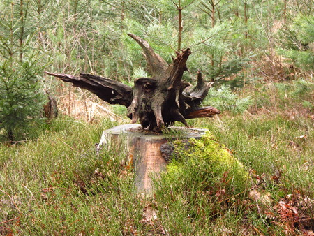 woodland sculpture: Bizzare piece of wood lying on the stump like a statue on the piedestal