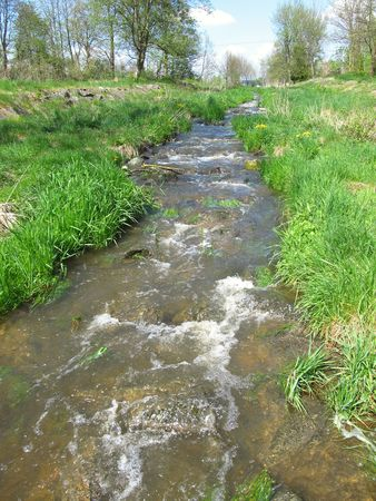 brook: Brook flowing through green meadows in spring