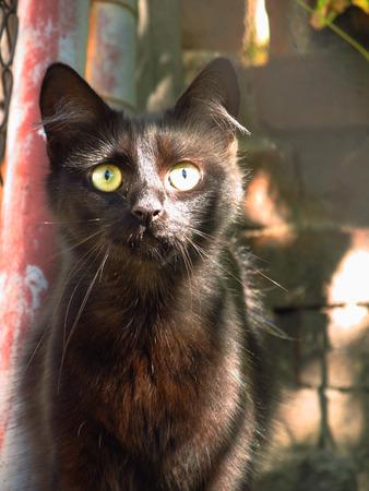 cuteness: cute black kitten next to the fence in the garden