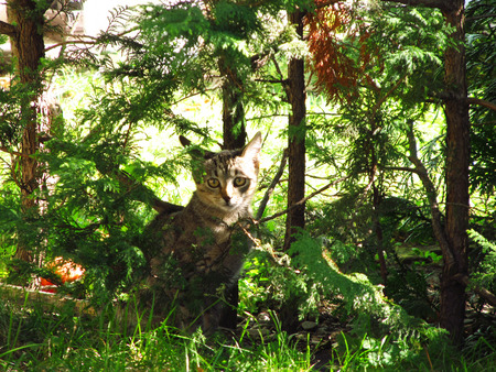 animal welfare: cute gray and brown kitten among the small trees in the garden Stock Photo