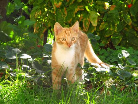 cuteness: cute ginger kitten in the green garden in summer