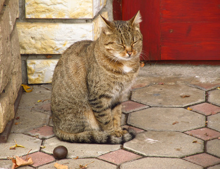 cuteness: gray and brown cat sitting next to the house