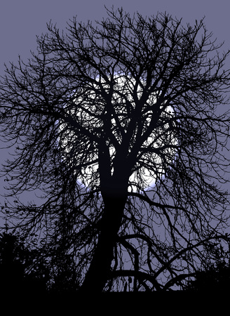 cursed: illustration of silhouette of tree in the night with moon behind it Stock Photo