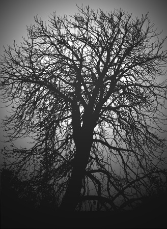 illustration of silhouette of tree in the night in gray shades Stock Photo