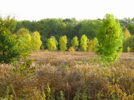 sear: trees with green leaves growing among brown sear plants in early autumn