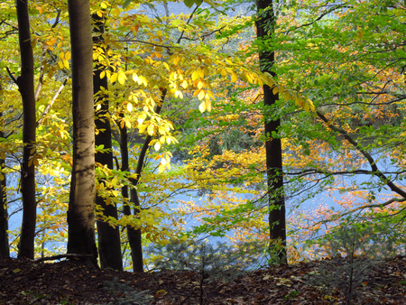 yellow trees: forest in autumn with green and yellow trees Stock Photo