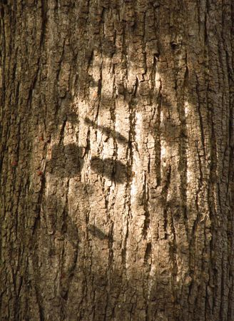 tree with shadow on the surface shaped like a face Stock Photo