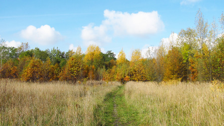 sear: path leading through the sear meadow to the forest in autumn