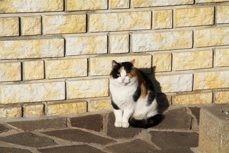 cuteness: tricolor cat basking in the sun next to the brick wall