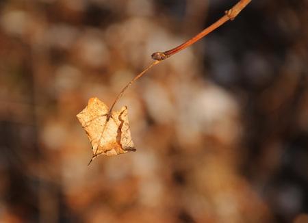 sear: close photo of small sear leaf on the twig Stock Photo
