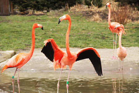 several: several colorful flamingoes standing in the water Stock Photo