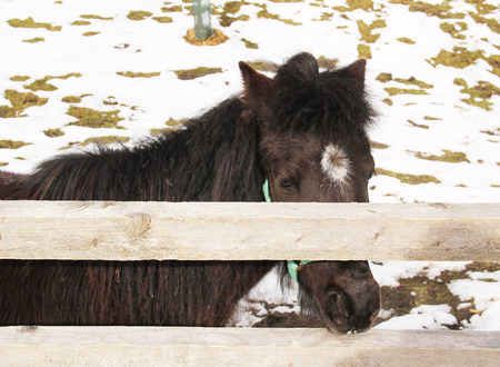 dark brown hair: pony with dark brown hair behind the wooden fence Stock Photo