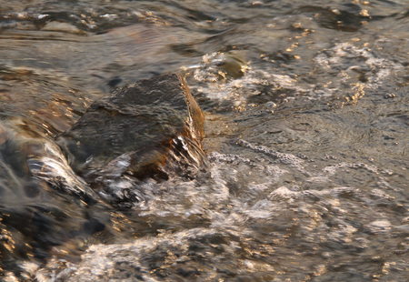 bubbling: close photo of a stone in the stream of bubbling river