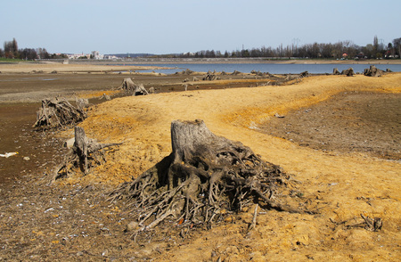 revealed: stumps of dead trees with revealed roots on the bottom of drying pond Stock Photo