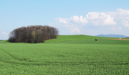 agronomic: green field with crop and a tractor riding on it in spring