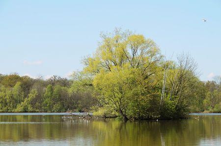 floodplain: Seagulls on the trees in floodplain forest in Poodri, Czech Republic in spring Stock Photo