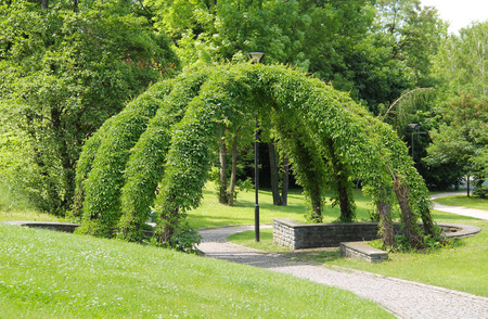 arbour: green wicker arbour in the park in summer