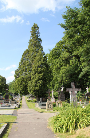 sidewalk in the cemetery leading straight between graves with crosses and coniferous trees Stock Photo