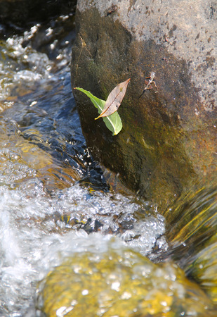 bubble level: two leaves stuck on the stone above the water in the river Stock Photo