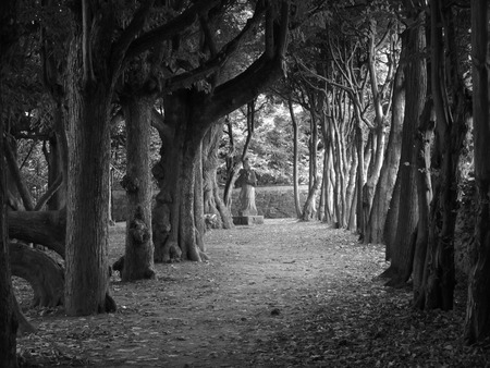 black and white photo of dark tunnel of trees leading to the old statue in Vizovice, Czech Republic