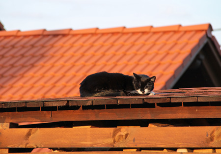 cute black cat sleeping on the roof of a shed in the evening light Stock Photo