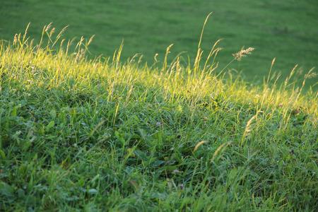 enlightened: enlightened stripe of grass on the green meadow