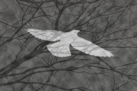 photomanipulation of a white ghost of a bird flying in front of branches of the trees in the misty night