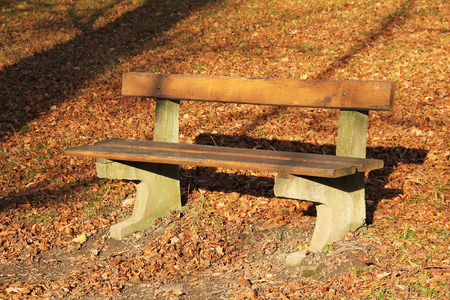enlighten: wooden bench and fallen leaves around it on sunny autumn day