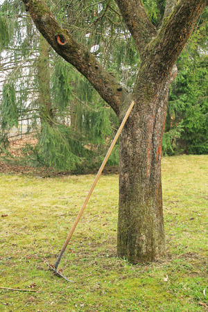 leaned: rake leaned on the trunk of a tree in the garden Stock Photo