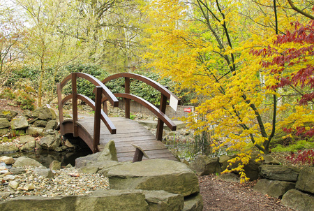 acer palmatum: footbridge and colorful maple trees with yellow and red leaves in ZOO Ostrava, Czech Republic - editorial