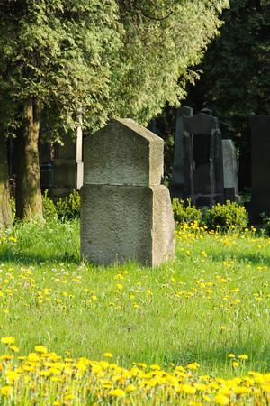 old tombstone on Jewish cemetery and many yellow blooms of dandelions in Frydek-Mistek, Czech Republic