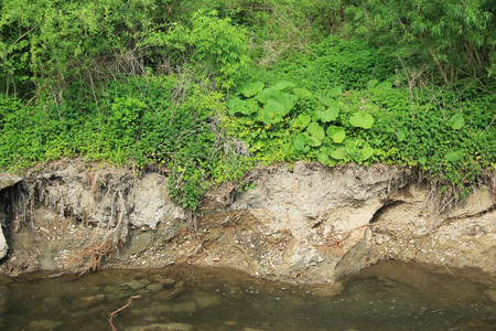 undermined bank of the river and green vegetation on the top of it