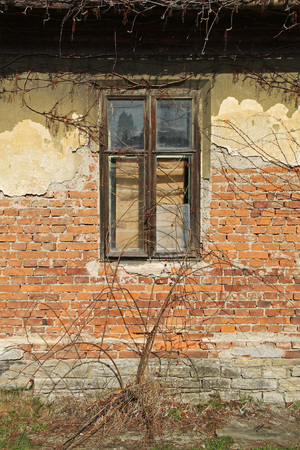 window in the broken wall of a ruined house with sear woodbine plants growing on its surface
