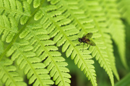 close photo of a fly sitting on the leaf of fern