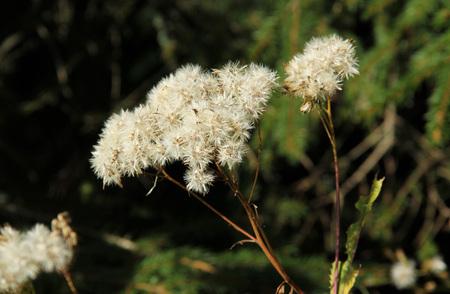 秋に白いサギとシアー植物