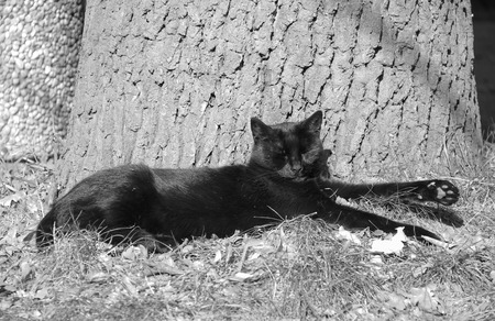 black and white photo of a cute black cat basking in the sun