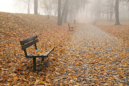 benches and many fallen yellow leaves in the park in autumn on melancholic misty day