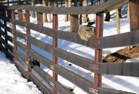 two cats relaxing on the wooden fence and basking in the sun in winter Stock Photo